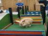 Kaninchen im Parcours