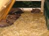 Die erste Kaninchenfamilie ist eingezogen